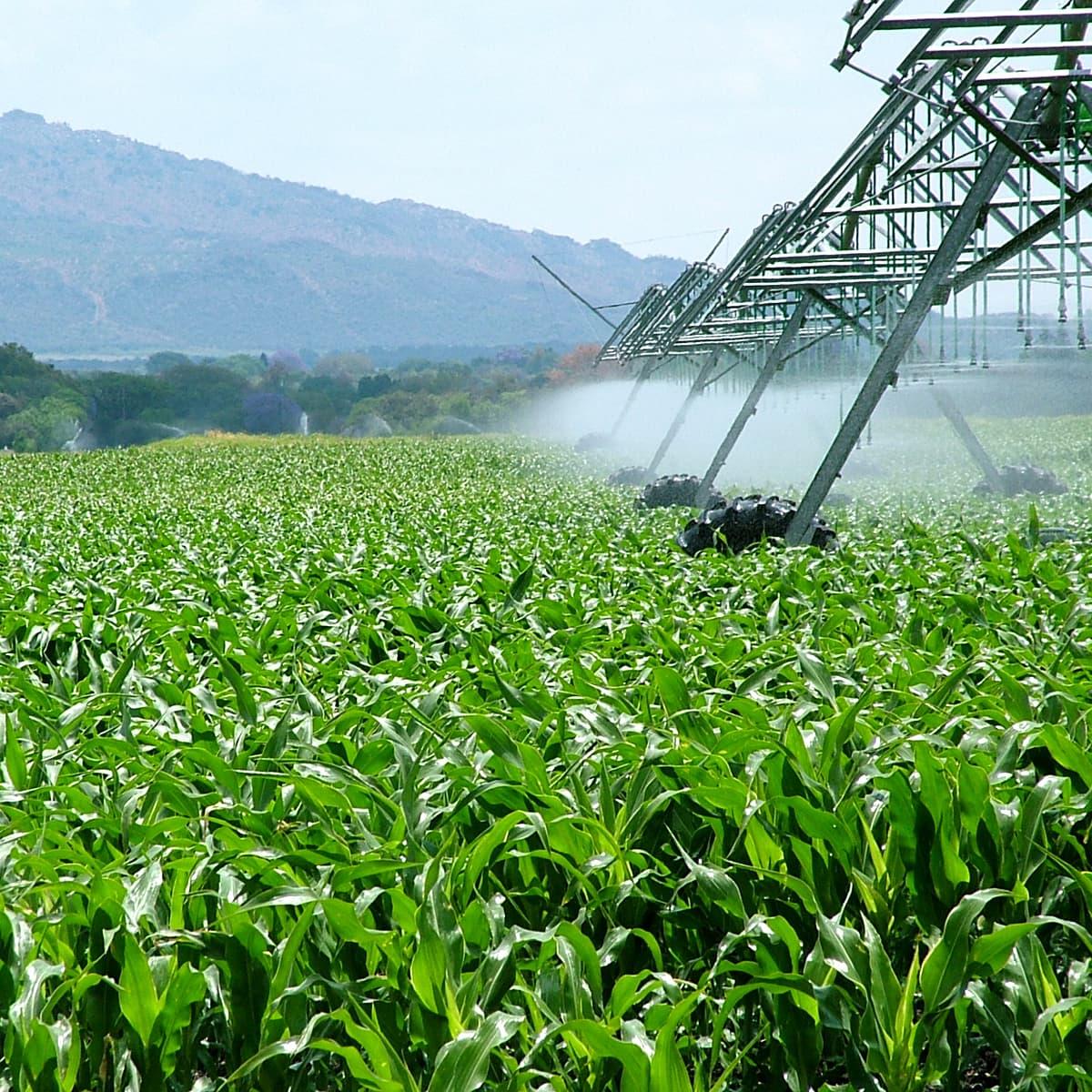 O julgamento do Tema 796 pelo STF e sua inaplicabilidade às holdings rurais